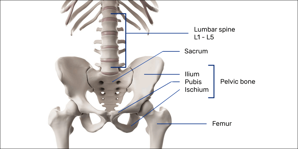 lower back pain from gaming: bony anatomy