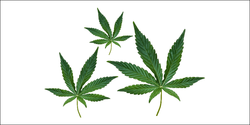 Gamer guide to cannabis